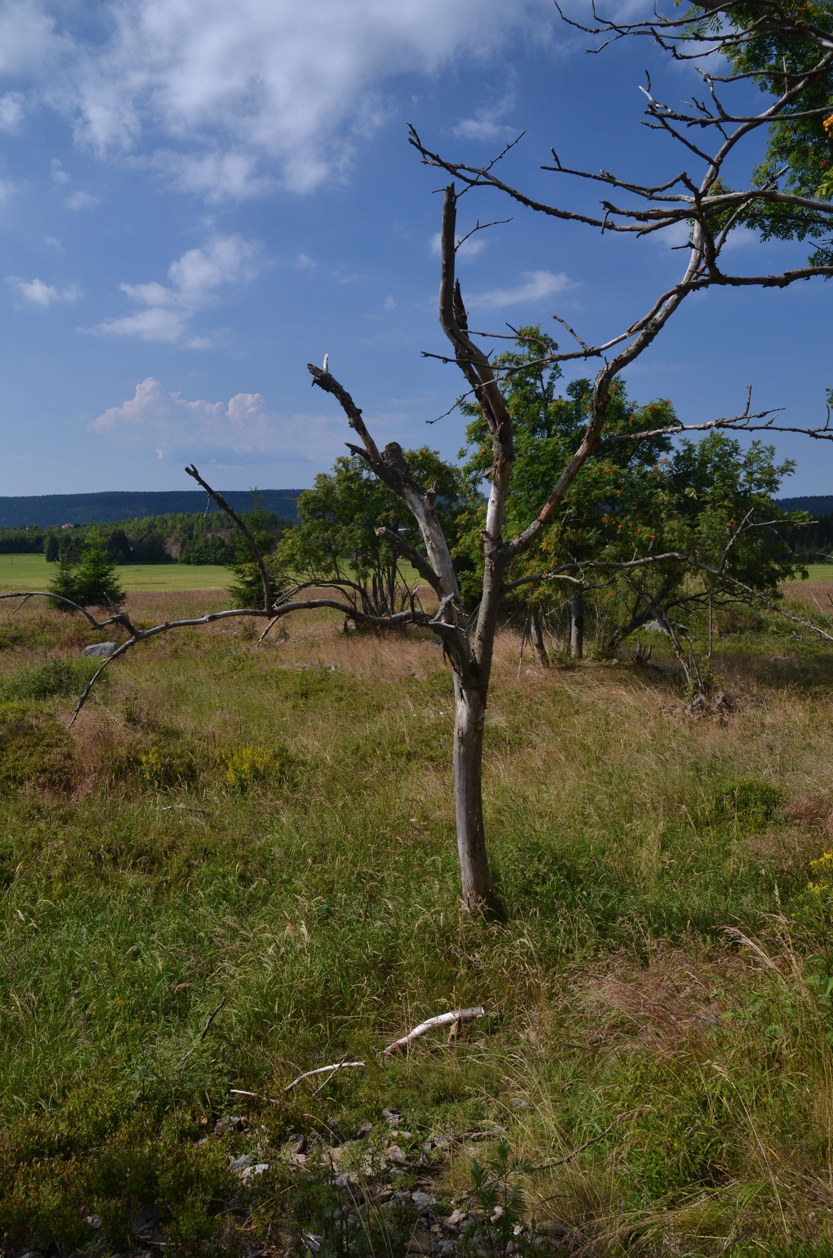 propadlina na rašeliništích